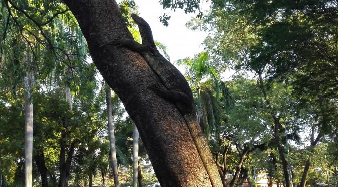 Fauna local | Local fauna