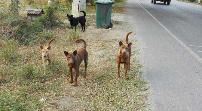 Els gossos i…