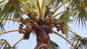 El famós fruit que genera tant i tant de negoci al seu voltant