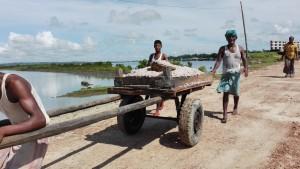 Transportant peixets que s'oloren des de molt lluny