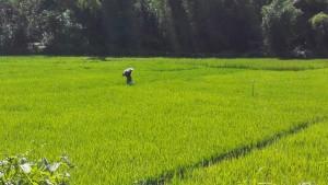La solitud de la pagesia. Sol a Bangladesh! Miracle!!