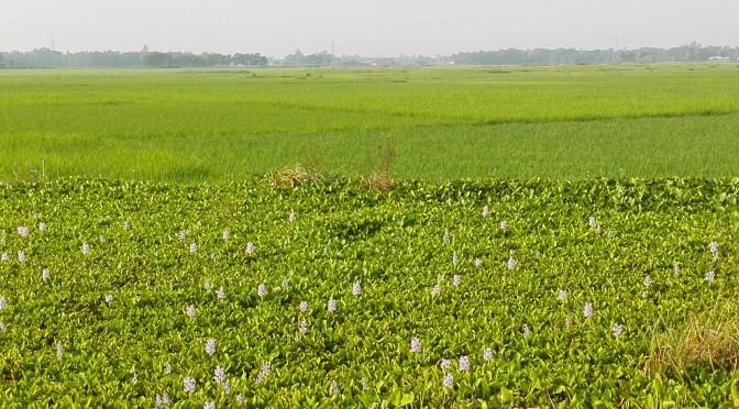 Chittagong – Comilla