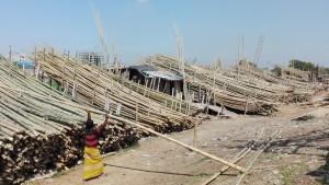 Canyes de bambú