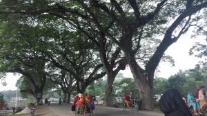 Meravellosos arbres, estimats companys de ruta