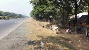 L'autopista amb vaques, cases i vida local rural a tocar