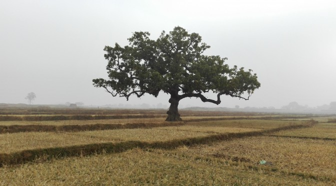 Bhalua – Benarès