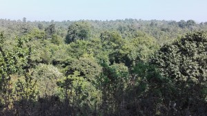 Boscos verds i frondosos