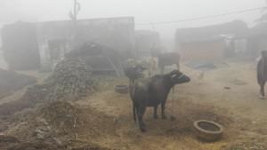 Vida rural emboirada