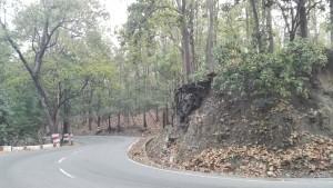 Carretera, arbres i fulles, quan el camí és un plaer
