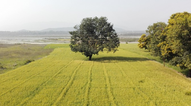 Rishikesh – Chandigarh
