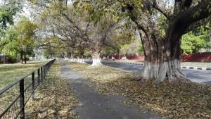 Molts arbres son joies de la natura que adornen els carrers amb la seva majestuositat