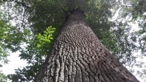 Els arbres, els quals venerem, han estat els protagonistes al parc de Golestan. Son veritables joies i monuments a la natura
