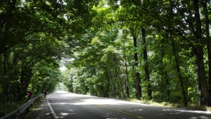Després de setmanes i centenars de quilòmetres, trobar-se un tram així cobert amb aquests preciosos arbres que ens regalen una divina ombra és un gran regal