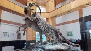 Fauna existent al Parc Nacional de Golestan