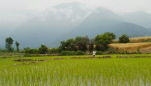 Camps d'arròs i grans muntanyes de rerefons cobertes per núvols i boires