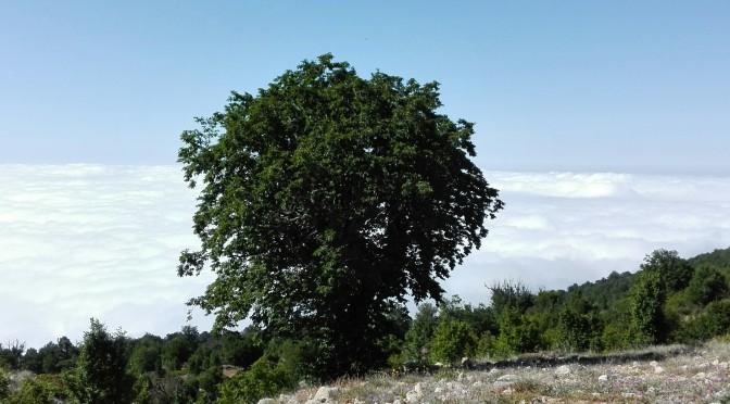 Parc Golestan – Gorgan