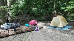 Avui podem acampar a un bosc pròpiament dit. Ocells, arbres, molta pau i també molts insectes