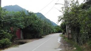 El plaer de caminar per una carretera local. No és la meravella de camí de bosc que mostràvem fa uns dies quan acampàvem al bosc, però és molt millor que la carretera principal