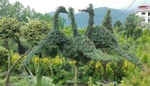 Quilòmetres de planters d'arbres i plantes de decoració (no arbres fruiters, ni plantes de menjar) fan el camí molt més agradable. Moltes plantes estan artísticament treballades