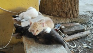 Imatge de la tendresa. 3 germanets fent la migdiada