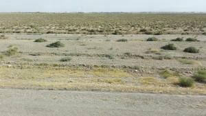 Paisatge habitual durant molts quilòmetres. També hem trobat camps de blat collit i camps de magraners