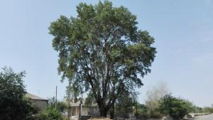 Grans arbres adornen majestuosament la carretera de tant en tant
