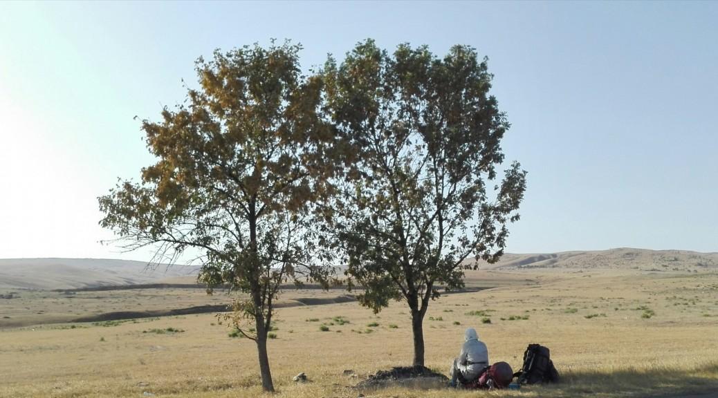 Calla, mira, no desesperis! Aquí tenim 2 arbres més que ens regalen una minsa però bona ombra. Aturem-nos a descansar!
