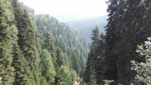 Boscos i arbres així ens alimenten el cervell i reguen l'esperit