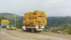 La gran majoria dels poquíssims camions que circulen van carregats de palla fins a límits insospitats