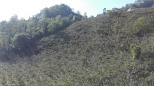 Muntanyes d'avellaners