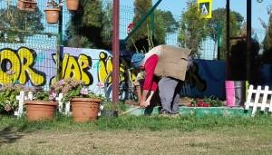 Picant i foradant el terra ben fons amb un petit cavaguet per mirar de salvar 3 rosers macos i poder-los trasplantar a un altre lloc