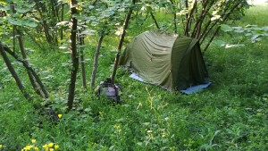 One of Lluís' campsites -- a night among the hazelnut trees, a common feature around the Black Sea.