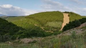 Paisatge de bosc baix, mediterrani amb tallafocs