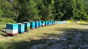 Aquests ruscs han de contenir una mel boníssima…