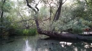 Bonic arbre al parc central de Drama
