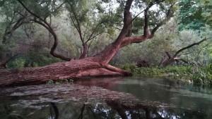 Un altre bonic arbre al parc central de Drama