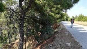 Quin plaer poder caminar sobre pinassa i a l'ombra de pins!