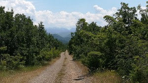 Un bonic camí cap a les muntanyes que des de lluny ja ens impressionen doncs anem cap allà