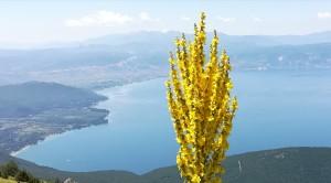 Llac Ohrid amb Albània de rerefons