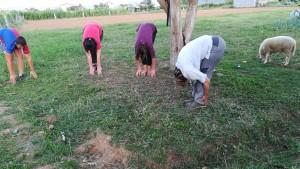 Jenn fent classes de ioga amb els fills del nostre amable amfitrió. L'ovella es va colar a la classe, igual que ho feia a la casa.