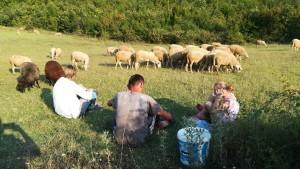 Vigilant el ramat mentre compartim reflexions sobre la vida amb un pastor d'ovelles i sa dolça filla