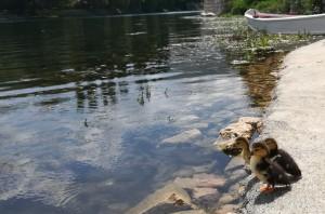 Tres germanets a punt de banyar-se