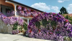 Per que ens encanten les flors!