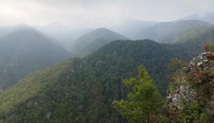 Muntanyes i muntanyes inaccessibles, total i espessament cobertes d'arbres