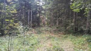 Aquest és un dels camins per dins el bosc que hem de seguir per sortir a una zona més oberta i, eventualment, retornar a la 'civilització'