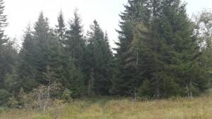 Una mena d'entrada secreta que porta cap a la cabana, literalment perduda al mig del bosc