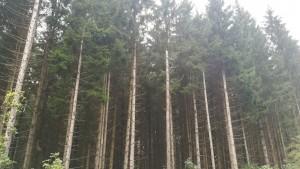 Quins arbres més bonics!