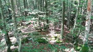 La densitat i preciositat dels boscs és innegable, però durant uns quants quilòmetres hem vist aquestes cintes i estaques vermelles al terra i, sense confirmar-ho de cap manera, això ens recorda massa als camps minats que hem vist fa molts pocs dies. Potser aquí ja ho han netejat, però aquestes senyals no ens fan cap gràcia