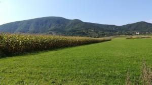 Camps d'herba i blat de moro, molt típic per aquí, juntament amb els boscs ben farcits d'arbres