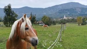 Cavalls, verd, muntanyes… bonic